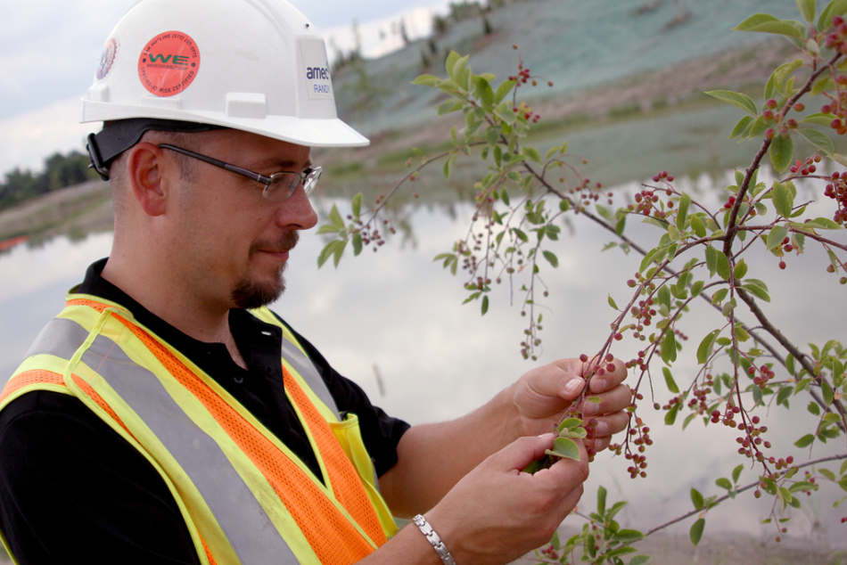 Environmental manager for the parkway group Randy Brunatti checks on newly planted vegetation at the project's Matchette Road construction access point, Thursday, July 10, 2014. (RICK DAWES/The Windsor Star)