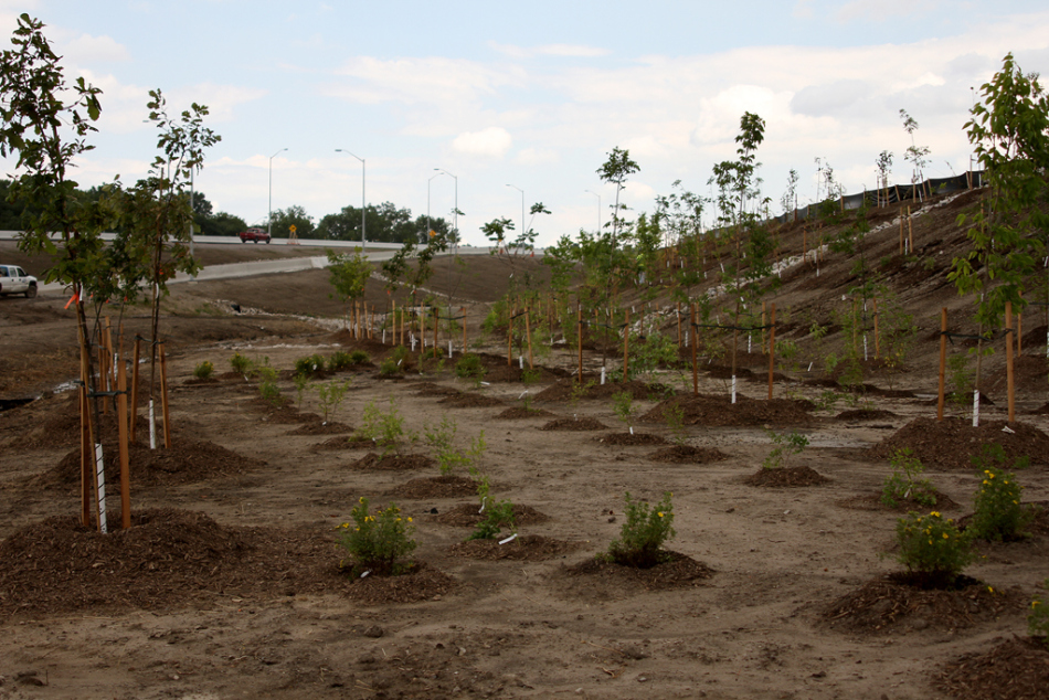 Young trees were planted at the Rt. Hon. Herb Gray Parkway project's Matchette Road construction access point, Thursday, July 10, 2014. (RICK DAWES/The Windsor Star)